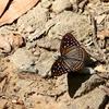 カティエン(CatTien)国立公園の昆虫
