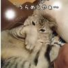 しるびぃあの今日の日記~ゴースト