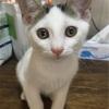 保護っ子猫ちゃん~トライアル、譲渡決定!~