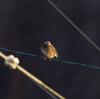 半月埋立地の野鳥