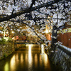 祇園白川ライトアップ再開を喜ぶ@2019