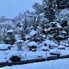 今朝は満開の桜と雪のコラボレーション!