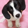 子犬の甘噛みはどう対処する?トリマーの経験から的確に教えちゃいます!