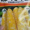 秋取りトウモロコシと枝豆の話
