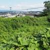 スルハチ池(福島県須賀川)