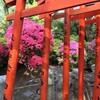 【根津神社】毬みたいに咲く満開のツツジと、乙女稲荷の連なる鳥居を見てきました^^