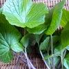 葉山葵と蕨