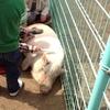 春の姫路市動物園(ぶた、ツチブタ、ハト)
