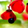 昭和記念公園の秋の花。と、カイツブリ(^^)