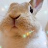 【うさぎ飼い初心者必見】ウサギの換毛期におすすめブラシ動画第2弾!嫌なことはまず形から入るべし!!