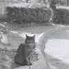 モノクロフィルムで野良猫撮影