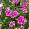 たくさんの花が開花中!