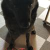 甲斐犬サンの「グチ聞クヨゥ」の巻〜ドンマイ(´・ω・)ノ(´;ω;)ウッウッ