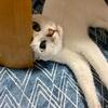 【臆病な猫】日々の生活と私の体験談㉙!!