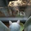 野良猫の生態をまとめてみた。