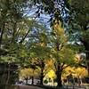 明治神宮につづく銀杏並木&ナチュラルハウスランチ