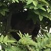 磐田市で庭の木に巣を作ったスズメバチを駆除してきました!