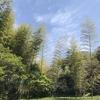 竹林の山に入る