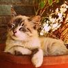 おさらい!猫が口にしてはいけない身近な食べ物