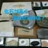 【ヤフオク!】化石が高く売れたわけは?