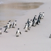 ファーストペンギンはチャレンジャー!?経営用語から学ぶ考え方・価値観
