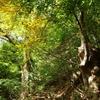 初秋の小五郎山へ
