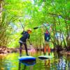木漏れ日射し込むマングローブを SUPサップで漕いでみよう。八重山旅行・西表島ツアー