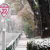 桜舞う雪化粧