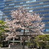 みなとみらいの剛桜&東大寺ライブの映像