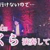 さ〜く〜ら〜