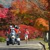 "2020/11/14 Sat. ""海の京都"" を走る"