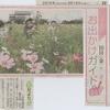 神原町花の会(花美原会)(221)   中日新聞「可憐な花が咲き誇るコスモス畑」