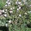 バンクーバーの植物園 – ツーリズムチャレンジ