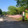 ベルチャンの介護75 『お散歩~あつぎつつじの丘公園~』