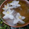 秋雨の庭と最後の胡蝶蘭