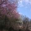 春の六呂師高原 -1