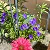 持ち家か賃貸か? 春の朝の庭は気持ちいいよ!