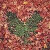 【ゆるアウトドア】秋の実さがし