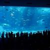 【夕方がオススメ】「美ら海水族館」のジンベエザメの給餌解説が面白そう!