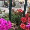 市役所の花々