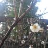最新スケジュール【3月】ご予約受付フォーム