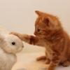 野良猫の子猫を飼うことに!野良子猫との暮らしの始めかたとは?