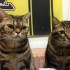 溺愛する実家のネコ2匹を紹介します