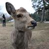思い立ったら奈良公園!