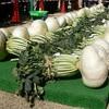 その大きさはギネスにも認定されている鹿児島県特産の野菜は