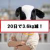 【ダイエット】20日で3.6kg落とすまでの過程。