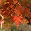 秋の円遊…静かなる比良