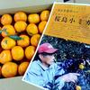 鹿児島特産「桜島小みかん」はこうして料理の彩りに使え!