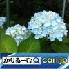 人気の家計簿アプリ! cari.jp
