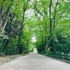 【シカマルの戦い】糺の森×NARUTO